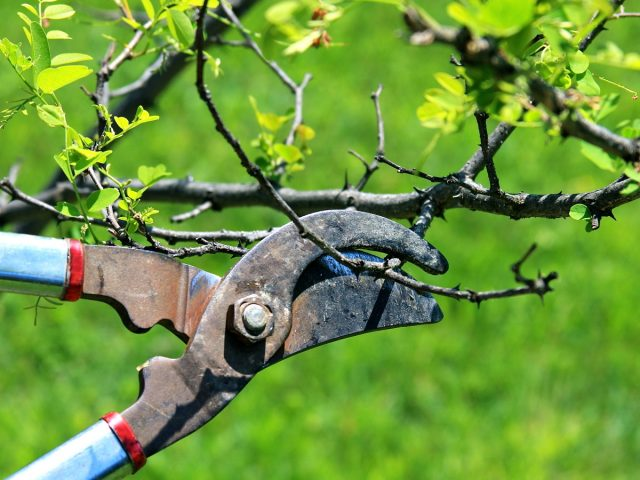 Ways A Tree Surgeon Can Assist You